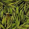 黄茶(ファンチャ)
